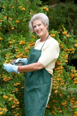 http://www.dreamstime.com/royalty-free-stock-photography-senior-gardener-image24895207